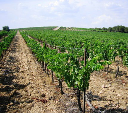 Domaine René Rostaing image