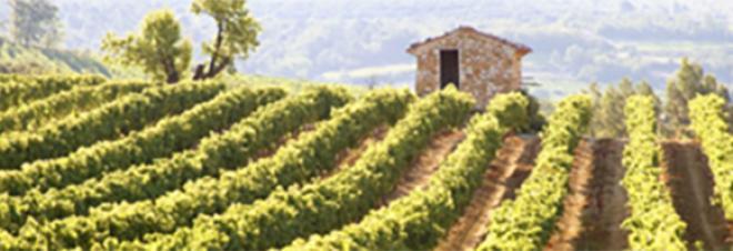Armit Wines