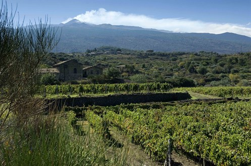 Etna From Our Vinyards